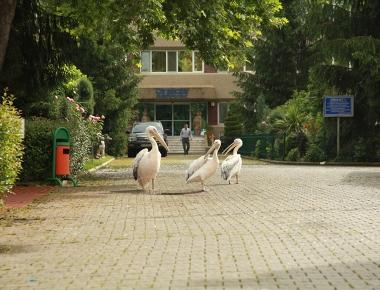 Yaşam Parkı